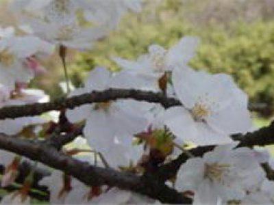 タリタ・クム!29号 復活祭号 発行